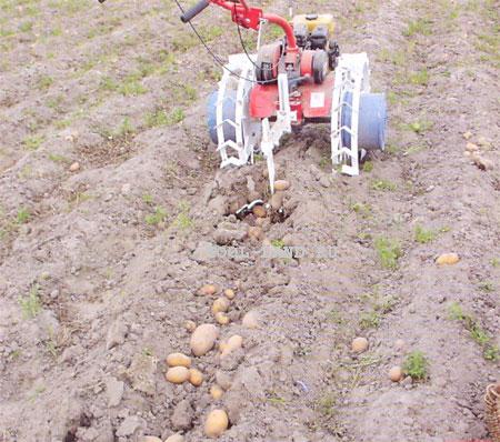 Выкапывание картофеля мотоблоком