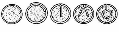 Варианты конфигурации оболочки порошковой проволоки